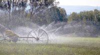 La Secretaría de Agricultura, Ganadería, Desarrollo Rural, Pesca y Alimentación (SAGARPA), dio a conocer que el impulso a los sistemas de tecnificación de riego en el campo mexicano permitirán ahorrar […]