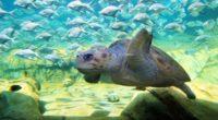 El parque temático SeaWorld San Antonio, en el estado de Texas, EEUU, presentó Turtle Reef , que cuenta con un hábitat de biofiltración, pionero en su tipo. Los visitantes pueden […]