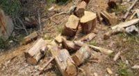 La Secretaría de Medio Ambiente y Recursos Naturales (SEMARNAT), a través de la Procuraduría Federal de Protección al Ambiente (PROFEPA), combatirá la tala clandestina en el municipio de Ocuilan, Estado […]
