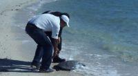 La Procuraduría Federal de Protección al Ambiente (PROFEPA) reintegró a su hábitat natural a una Tortuga marina de la especie tortuga prieta en la Bahía de la Paz, Baja California […]