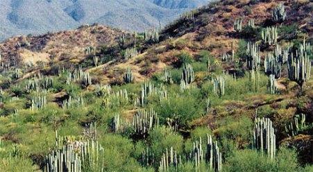 Analizan que Tehuacán-Cuicatlán sea patrimonio mundial  66d12fab4de70