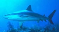 La Comisión del Fomento al Turismo de Sonora dio a conocer que la Isla Tiburón, ubicada en lo alto del Golfo de California muy cerca de la costa este del […]