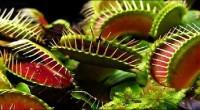 Conoce cómo cazan las plantas carnívoras Necesitan a los insectos como alimento para sobrevivir a un suelo pobre en nutrientes Un reciente estudio muestra con precisión y detalle cómo actúan […]