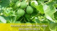 Se anunció que el próximo 25 de septiembre, Veracruz será sede del foro sobre Potencialidades e Impacto Regional de los Biocombustibles, anunció el titular del Instituto Veracruzano de Bioenergéticos (Inverbio), […]