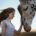 Desde el año 2015 la Ley General de la Vida Silvestre prohibió en México utilizar animales en los circos. El centro de conservación Zoofari, recibió con carácter de urgencia a […]