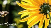 Los antófilos, también conocidos como las abejas, son la clase de insectos que son primordiales para el equilibrio de los ecosistemas. Estos tienen presencia en todo el mundo, excepto en […]