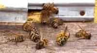 El 2 de julio pasado ingresó al Senado chileno un nuevo proyecto de ley que busca regular la actividad apícola, apoyado por los senadores Harboe, Matta, Tuma y Moreira. Es […]