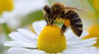 Las abejas y otros polinizadores son indispensables para tres cuartas partes de los cultivos y sin ellos, la productividad de los agricultores en México y el mundo se vería seriamente […]