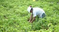 Ante el impulso del desarrollo sustentable y uso de zonas para fines forestales, se informó que en México existen unas 10 millones de hectáreas aptas para el desarrollo forestal. Se […]