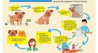 La importancia de adoptar a una mascota