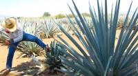 En aras de dar mayor posicionamiento a la bebida más representativa de México, se llevará a cabo el Festival del Tequila y Mezcal 2015, ello en la Cd. de México, […]