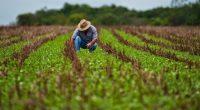 Una nueva publicación apoyada por la FAO analiza la influencia de las políticas públicas en la promoción de la agroecología en ocho países de América Latina y el Caribe, dicho […]
