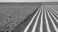 El gobierno de Egidio Torre Cantú firmó un Acuerdo de Intención para acrecentar el intercambio agro-comercial en la zona fronteriza, particularmente con el estado de Texas, para redimensionar su programa […]