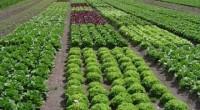 La organización ambientalista Greenpeace lanzó una petición en línea para que la empresa panificadora más grande del mundo y de capital mexicano, Bimbo impulse la agricultura ecológica en México, luego […]