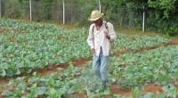 Se dio a conocer que investigadores del Centro de Investigación en Alimentos y Desarrollo (CIAD) unidad Culiacán (Centro Público de Investigación del Conacyt) participaron en el desarrollo del primer fungicida […]