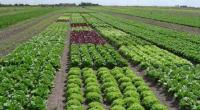 """En el pasado Foro Regional """"Innovación y Tecnología, Impulsando el Desarrollo del Campo Mexicano"""", organizado por Protección de Cultivos, Ciencia y Tecnología, A.C. (PROCCYT), Froylán Avendaño Rey, presidente de este […]"""