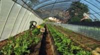 Se dio a conocer por parte de la Organización para la Agricultura y la Alimentación de Naciones Unidas (FAO) que se observa respetable crecimiento de las prácticas urbanas de agricultura […]
