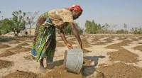 A tan sólo unas semanas de iniciar a preparar la tierra para la próxima temporada agrícola, unos 23 millones de personas en África austral necesitan con urgencia ayuda para producir […]
