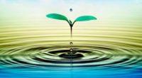 En el marco del Día Mundial del Agua, Agua Capital plataforma colectiva que contribuye a la seguridad hídrica del Valle de México, a través de cambios sistémicos con visión de […]