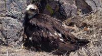 Se dio a conocer que gracias al Programa de Recuperación de Especies Prioritarias (PROCER), implementado por la Comisión Nacional de Áreas Naturales Protegidas (CONANP), se ha detectado que el estado […]