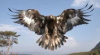 En Reino Animal Parque Temático, ubicado en el municipio de Teotihuacán en el Estado de México (Edomex) se cuenta con el área del Refugio del Águila Real, en donde se […]