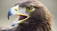 Ante diversos proyectos fallidos en conservación de biodiversidad han provocado que no se cuente con la sapiencia exacta de los ejemplares de Águila Real en el territorio nacional y sólo […]