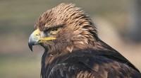 Desde 2007, la Comisión Nacional de Áreas Naturales Protegidas (CONANP), a través del Programa de Conservación de Especies en Riesgo (PROCER) , ha realizado diversas acciones enfocadas en la conservación […]