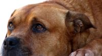 El Congreso de la Ciudad de México exhortó a las 16 alcaldías para que, en el ámbito de su competencia, implementen acciones en contra del maltrato animal. El punto de […]