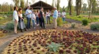"""La empresa """"Tequila Casa Dragones""""en apoyo a la alta cocina mexicanase une a Yolcan para la realización de una serie de comidas en el canal de Xochimilco, en el sur […]"""
