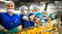 La Secretaría de Agricultura, Ganadería, Desarrollo Rural, Pesca y Alimentación (SAGARPA) informó que durante febrero pasado, productores mexicanos obtuvieron durante su participación en dos ferias agroalimentarias realizadas en Alemania ventas […]