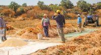 El amaranto mexicano, se encuentra en vías de consolidarse como un alimento con presencia internacional, ya que actualmente se comercializa en diferentes regiones de Norte, Centro y Sur de América, […]