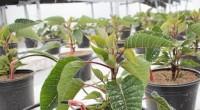 Ante el reto de encontrar alternativas para lograr en un futuro la autosuficiencia alimentaria en México, el campus Amazcala de la Universidad Autónoma de Querétaro (UAQ) ha desarrollado un proyecto […]