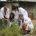 Luego de identificar dos metabolitos contenidos en los aceites del orégano mexicano (Lippia graveolens), investigadores del Instituto Politécnico Nacional (IPN), en la Ciudad de México (CDMX), utilizan herramientas de biología […]