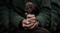 Ante la situación de abandono y maltrato físico que enfrentan los adultos mayores en México, la diputada Elvia María Pérez Escalante (PRI) propuso incorporarlos como sujetos pasivos del delito de […]