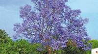 """En México se celebra """"El Día del Árbol"""", el segundo jueves de julio, a partir del decreto del Presidente Adolfo López Mateos, publicado en 1959. Suecia fue el primer país […]"""