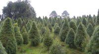Ante la cercanía de la época decembrina y con el objetivo de impulsar el desarrollo sustentable mediante una alternativa forestal provechosa y durable como los árboles navideños, el gobierno federal, […]