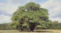"""PRNewswire.- El inventor holandés Pieter Hoff publicó el libro """"The Treesolution"""", donde plantea una solución a la concentración excesiva de dióxido de carbono (CO2) y al cambio climático, ello con […]"""