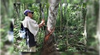 La Comisión Permanente del Congreso de la Unión, exhorta de manera firme al Ejecutivo federal a establecer programas de apoyo para fortalecer la producción chiclera en Campeche y Quintana Roo […]