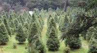 """El próximo 15 de junio se llevará a cabo la """"Mega Reforestación por México"""", organizada por Fomento Mexicano para el Desarrollo Sustentable, A.C., la cual consiste en la siembra de […]"""