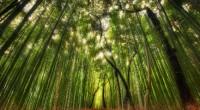 En la presentación del Índice de Competitividad Forestal Estatal (IcoFE) realizado por el Instituto Mexicano para la Competitividad (IMCO) y Reforestamos México, Rodrigo Gallegos, director de Cambio Climático y Tecnología […]