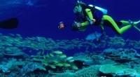 Una de las funciones más importantes del arrecife del Caribe mexicano, ante los huracanes, es la protección de las playas y a su vez de la infraestructura hotelera, ya que […]