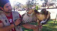 La Procuraduría Federal de Protección al Ambiente (PROFEPA) aseguró 9 ejemplares de vida silvestre en un predio ubicado en el municipio de San Juan de los Lagos, Jalisco, debido a […]