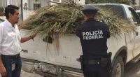 La Procuraduría Federal de Protección al Ambiente (PROFEPA) aseguró 700 hojas de Palma Realen el municipio de Puerto Vallarta, Jalisco, debido a que los propietarios de las mismas no contaban […]