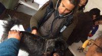 Un equipo de veterinarios mexicanos de Humane Society International ha brindado atención médica a más de 3 mil 500 animales, principalmente perros y gatos, en la zonas afectadas tras los […]