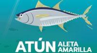 El Consejo Mexicano de Promoción de los Productos Pesqueros y Acuícolas (COMEPESCA), a través de su campaña de comunicación #PescaConFuturo, anunció la suma de dos especies más a su lista […]