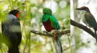 POR: Mariana Cerqueda Segundo En México contamos con una gran biodiversidad de aves, las cuales tienes colores diferentes y muy llamativos, cantos diversos y sonidos que las diferencian a cada […]