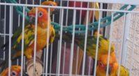 La Procuraduría Federal de Protección al Ambiente (PROFEPA) aseguró un total de 53 aves exóticas pertenecientes a la familia Psittacidae, en inspección realizada a un predio particular utilizado como centro […]