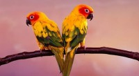 La gran biodiversidad de flora y fauna en aves con la que cuenta el estado de Tabasco, en el sureste mexicano, es una de regiones del país que por sus […]