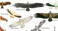 La caza intensiva insostenible y la matanza ilegal de aves migratorias practicada en muchas partes del mundo, están llevando a las especies al borde de la extinción. Algunas de las […]