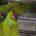 La Procuraduría Federal de Protección al Ambiente (PROFEPA) aseguró ocho ejemplares de vida silvestre que se encontraban en un inmueble del Fraccionamiento Floresta, en la Colonia Los Reyes Acaquilpan, Municipio […]